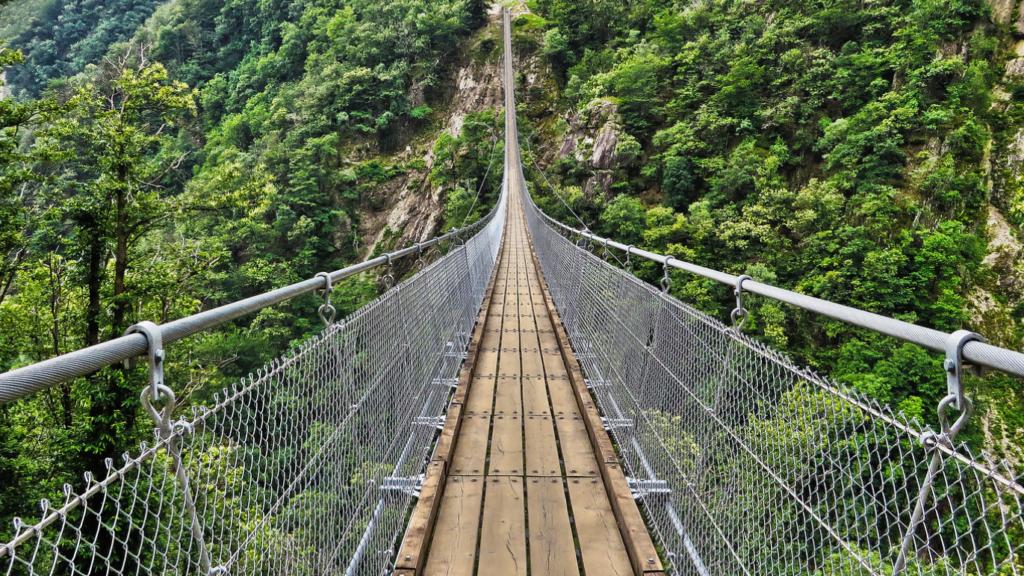 stalowo drewniany most w zielonym lesie