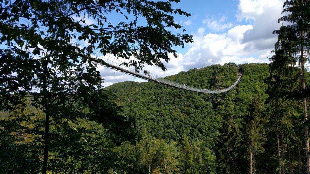 stalowy most nad koronami drzew